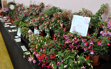 Birmingham and District Fuchsia Show